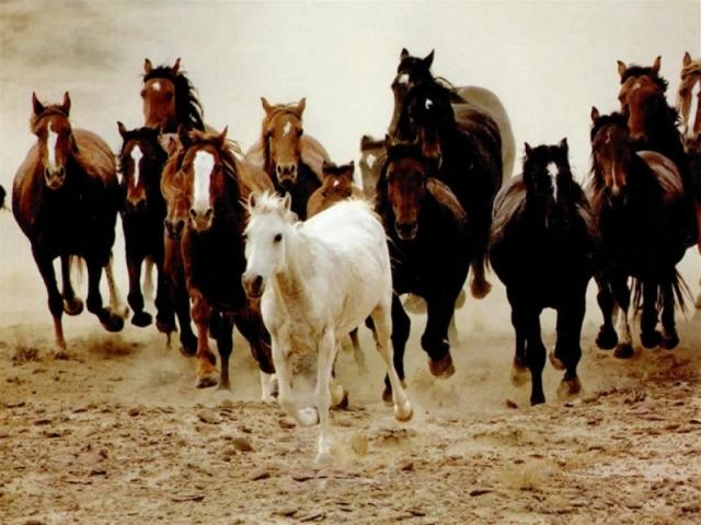 caballos-desbocados
