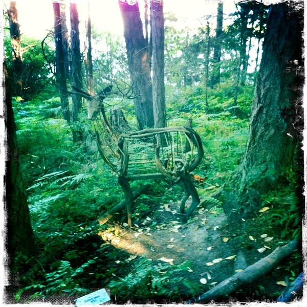 Pic:  San Juan Island forest art.  by me.