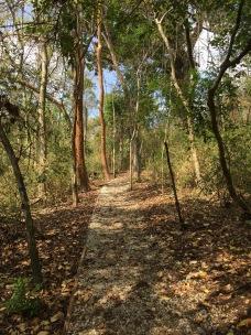 caminar en el parque como meditación