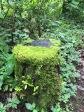 Mi silla verde